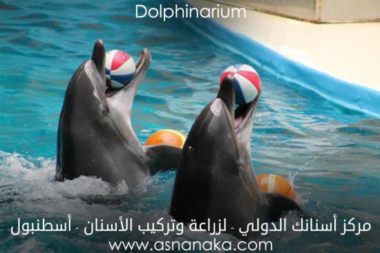 istanbul-dolphinarium